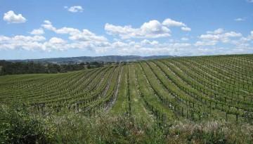 San Luis Obispo County Wine Country Day Trip