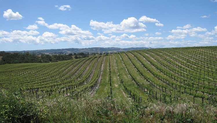 San Luis Obispo County Wine Country