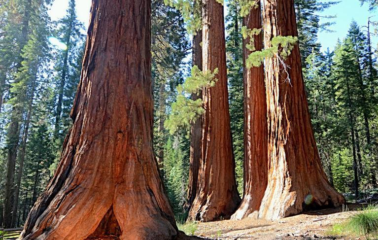 Sequoia-Kings Canyon National Parks
