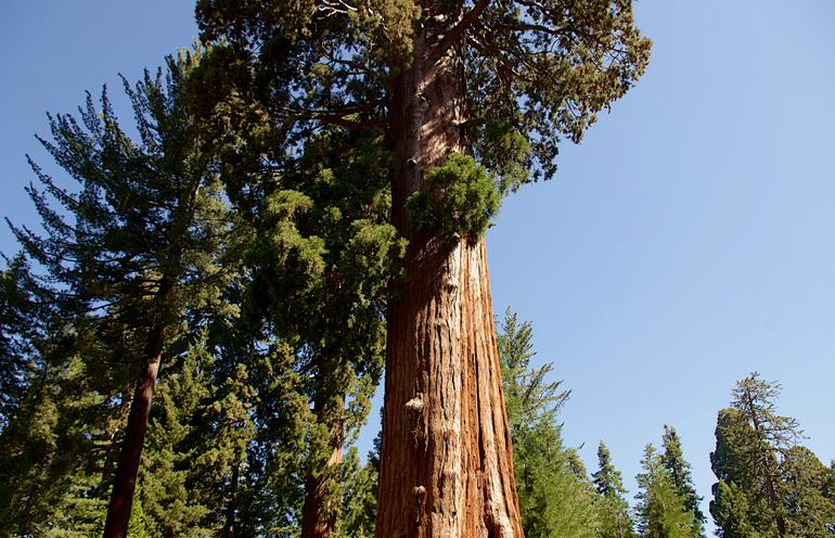 Sequoia and Kings Canyon Parks