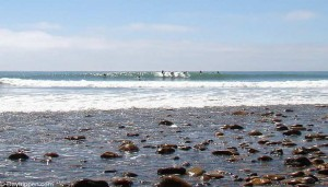 Trestles Beach Southern California Surfing