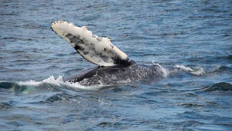 Seaforth Sportfishing Whale Watching Trips San Diego