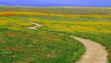Antelope Valley California Day Trip Things To Do