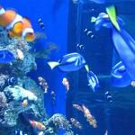 Aquarium of the Pacific Discount Tickets