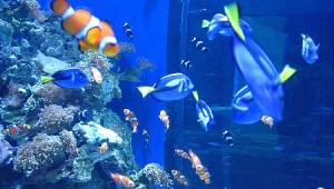 Aquarium of the Pacific Discount Tickets
