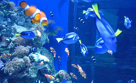 Southern California Amusement Parks Attractions