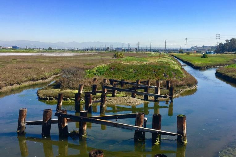 Ballona Fresh Water Marsh
