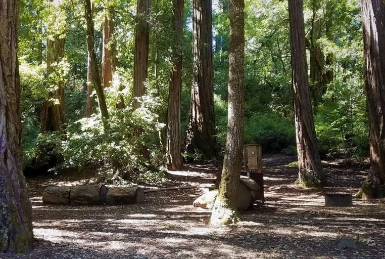 Camping Big Basin Redwoods State Park