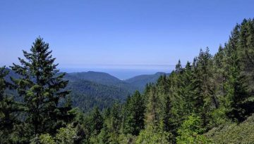 Big Basin Redwoods State Park Day Trip