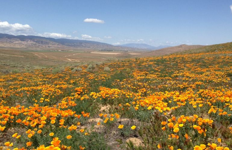 California Poppy Reserve Antelope Valley CA