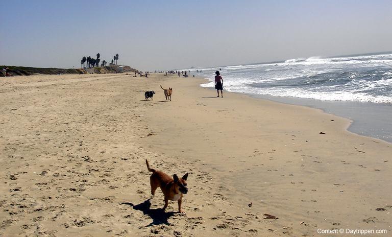 Huntington Dog Beach Day Trip