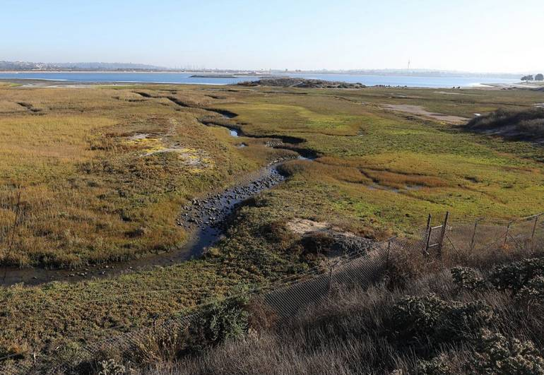 Kendall-Frost Mission Bay Marsh