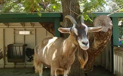 Irvine Park Zoo