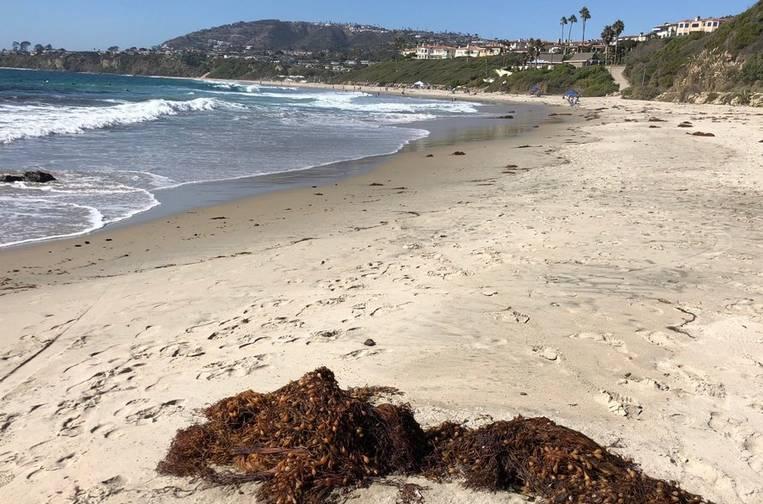 Salt Creek Beach