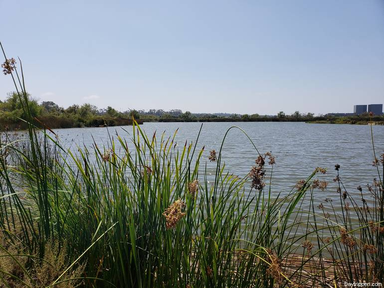 San Joaquin Wildlife Sanctuary
