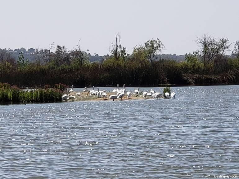 San Joaquin Wildlife Sanctuary Wildlife