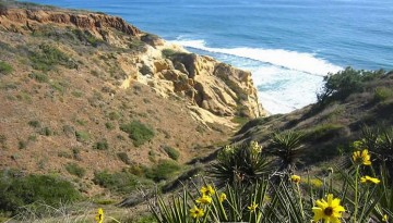 Day Trip to Torrey Pines State Reserve San Diego