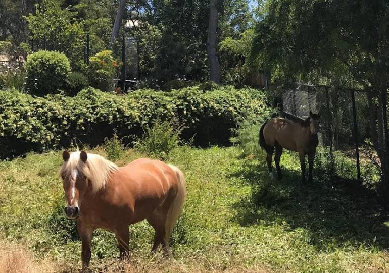 Connemara Ranch Malibu