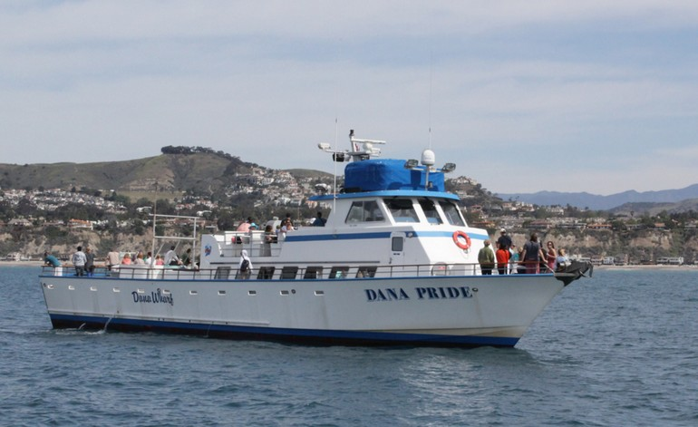 Dana Wharf Whale Watching Discount Tickets