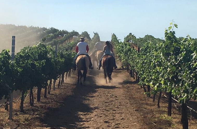 Temecula Horseback Wine Tour