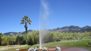 Old Faithful Geyser Calistoga Napa Valley