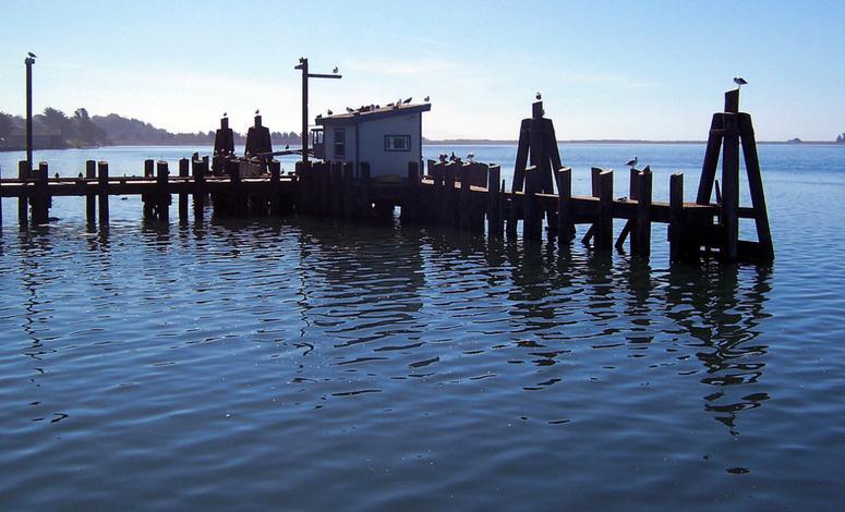 Bodega Bay Day Trip