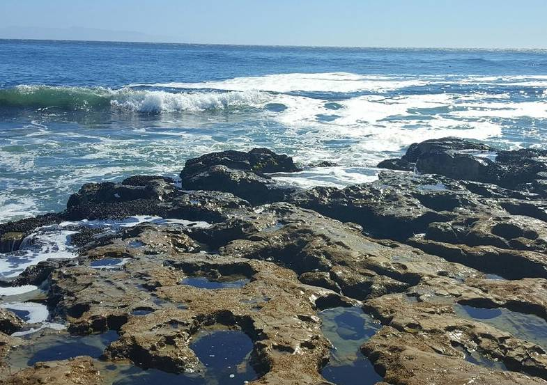 Natural Bridges State Beach Tide Pools