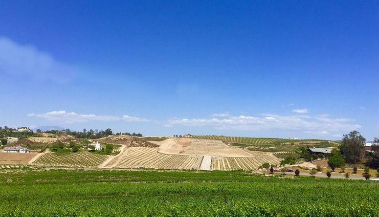 Temecula Valley Wine Tasting