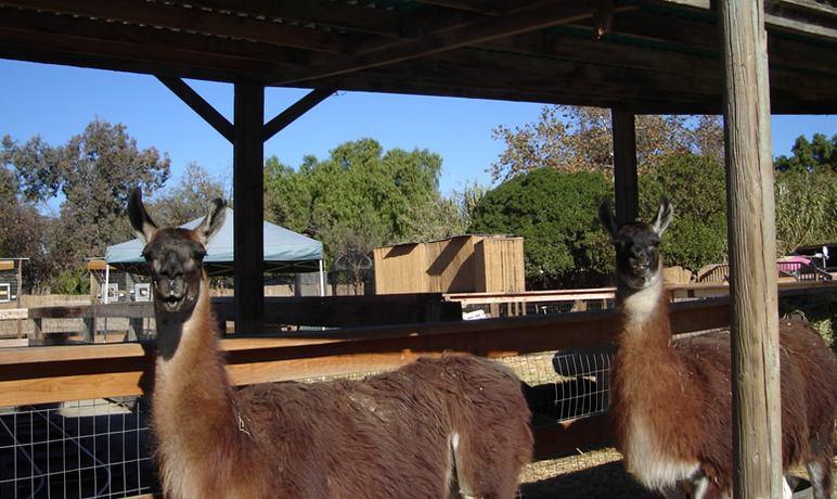 Zoomars San Juan Capistrano Petting Zoo