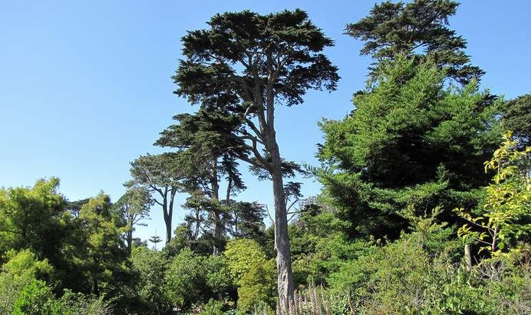San Francisco Botanical Garden Day Trip