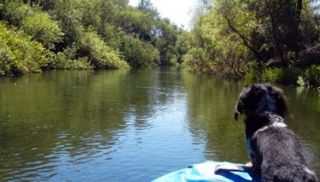 Dog Friendly Russian River Raft Trip