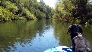 Dog Friendly Russian River Raft Trip
