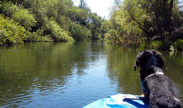 Dog Friendly Sacramento River