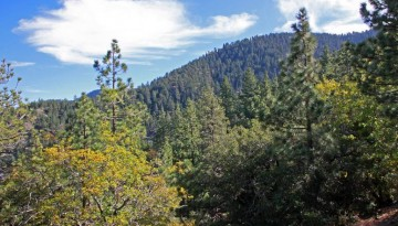 Table Mountain Campground Wrightwood CA