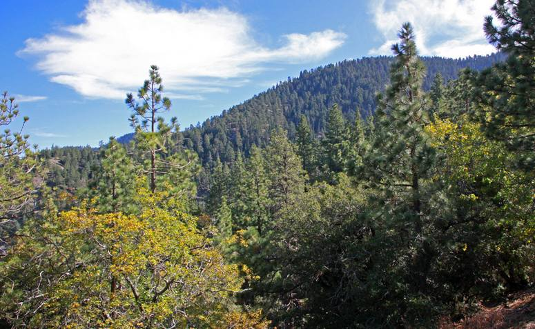 Wrightwood Elevation : Table mountain campground activities things to do