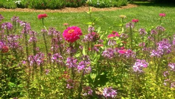 Descanso Gardens Day Trip La Canada Flintridge