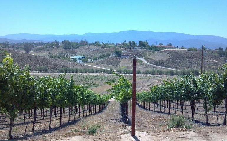Temecula Valley Wine Country Day Trip