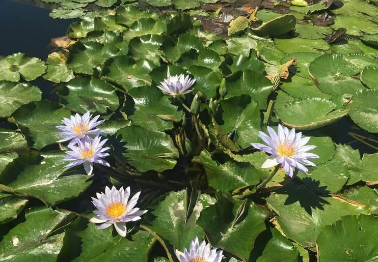 Japanese Garden Van Nuys Wet Garden