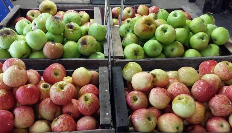 Avila Apple Trail