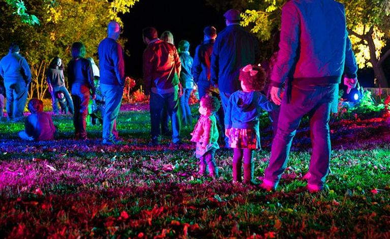 Enchanted Forest of Light at Descanso Gardens