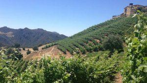Santa Monica Mountain Wineries Wine Tasting