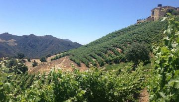 Santa Monica Mountain Wineries Wine Tasting