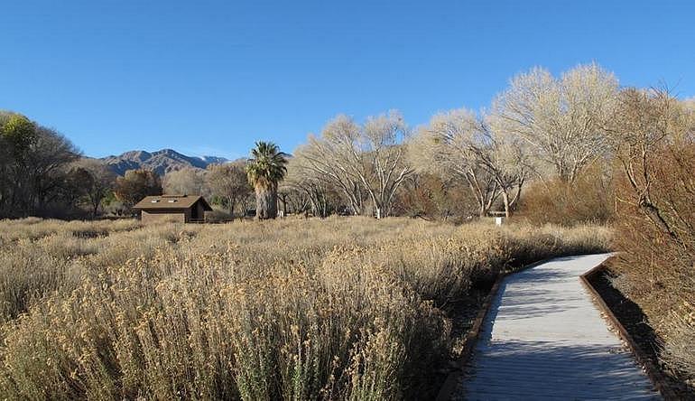 Big Morongo Canyon Preserve Day Trip