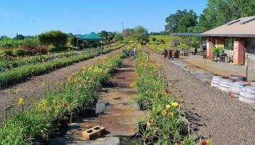 Amador Flower Farm Sacramento Day Trip