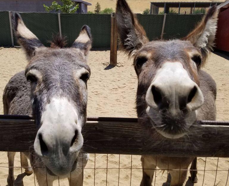 Friendly Donkeys