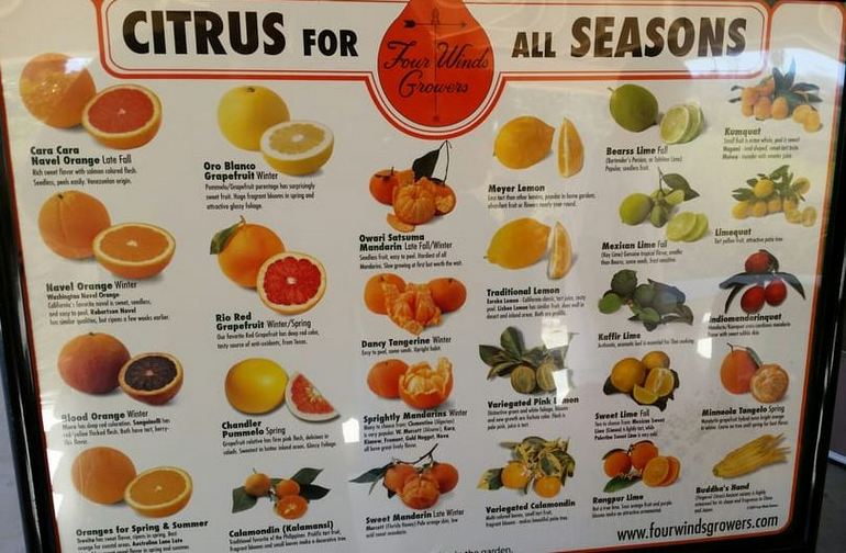Citrus for all Seasons