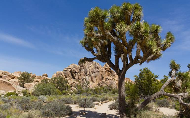 Joshua Tree National Park Day Trip
