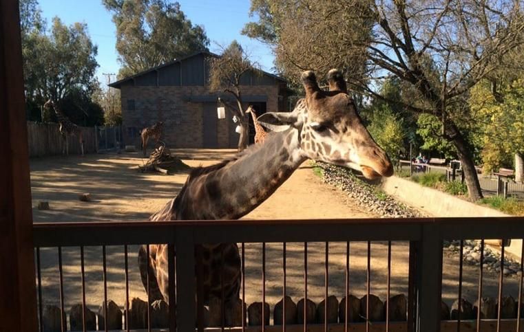Sacramento Zoo Day Trip