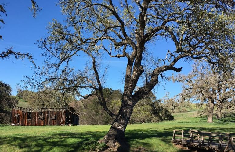 Santa Ynez Valley Day Trip Things To Do