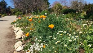 South Coast Botanic Garden Day Trip